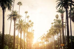 Los Angeles - Palmer